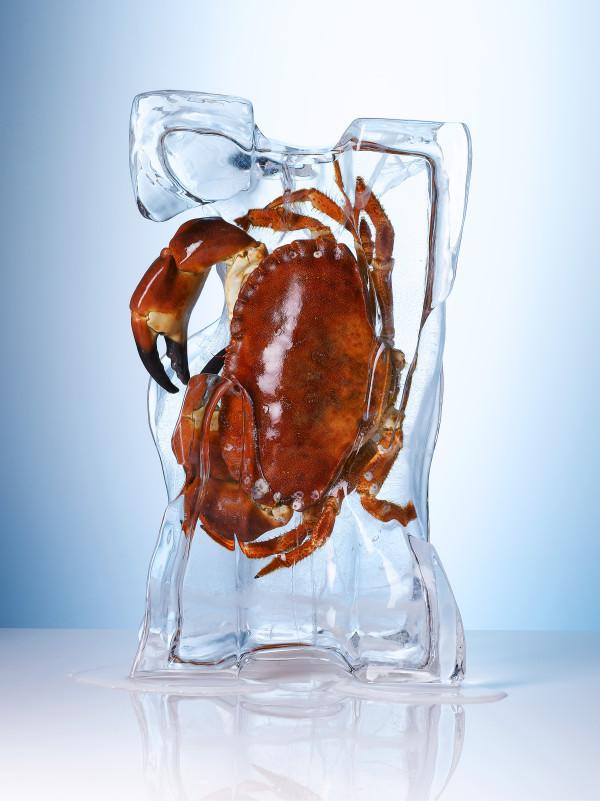 crab_ice